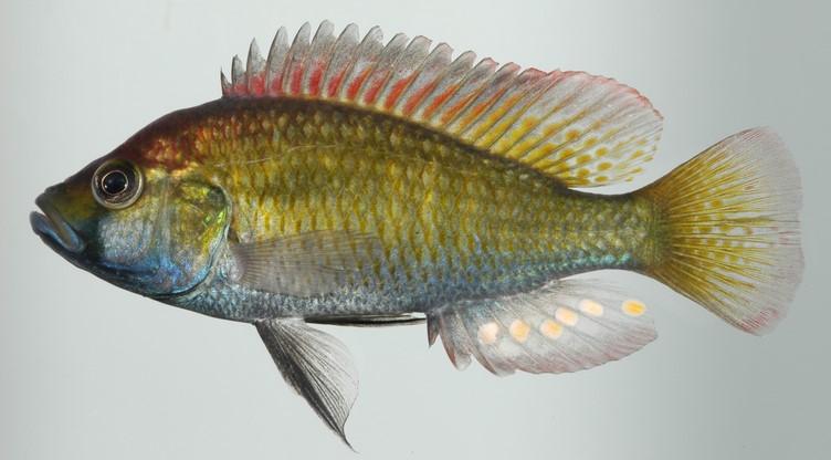Nonindigenous Aquatic Species