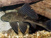fish picture -  click to go to the Fish page