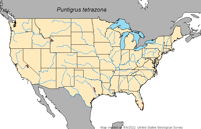 US auto-generated map