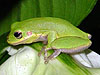 amphibian picture - click to go to the Amphibian page