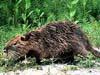 mammal picture - click to go to the Mammal page